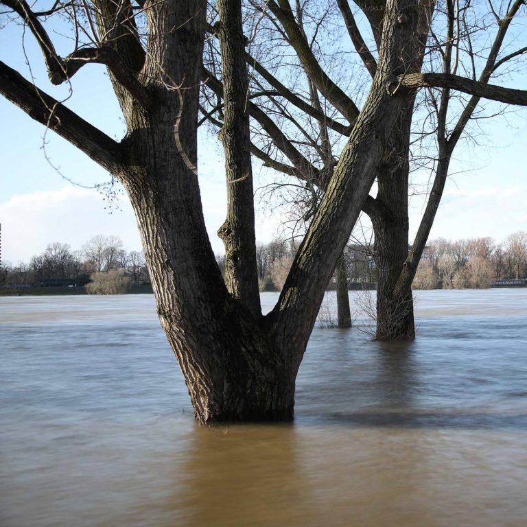 Der Rhein hat Hochwasser